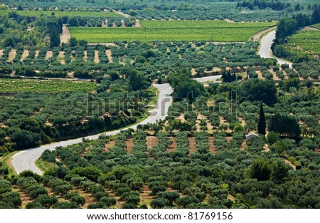 Provence scenery with road between olive gardens in South France