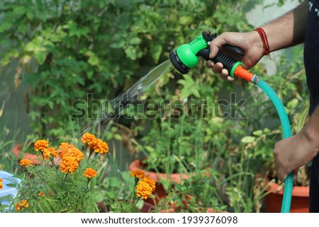 Proving water to the garden plants with the help of shower and pipe. Photo stock ©
