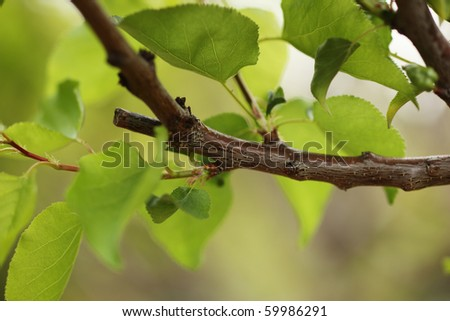 Pruned tree branch with green leaves. Close-up, shallow DOF.