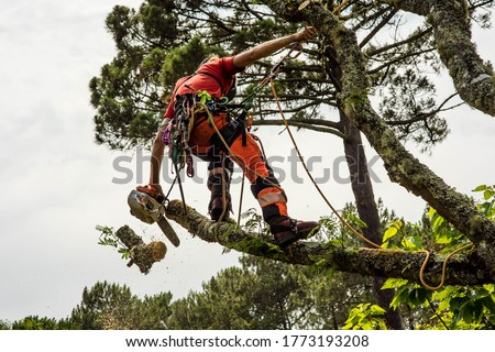 pruner in action with his chainsaw Stock photo ©