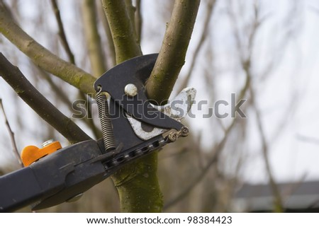 Pruning fruit trees by pruning shears. Detailed view of shears. Horizontally.
