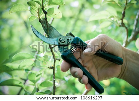Pruning of  trees with secateurs in the garden - stock photo