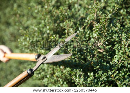 pruning shears and hedge #1250370445