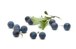 Prunus spinosa (blackthorn; sloe) scattered berries isolated on white background;