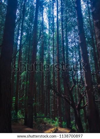 Prusia Forest in Costa Rica #1138700897