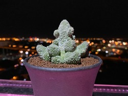 Pseudolithos comes from a combination of two Greek words,