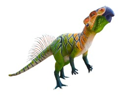 Psittacosaurus is a herbivore genus of extinct ceratopsian dinosaur from the Early Cretaceous, Psittacosaurus isolated on white background with clipping path