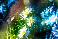 Psychedelic and trippy flowers blooming in Portland, Oregon. Dreamlike abstract flower blossoms.