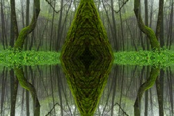 Psychedelic Rain Forest, Symmetrical Kaleidoscope Abstract Background.