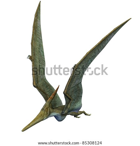 Pteranodon Dinosaur wings up flying. From the Late Cretaceous geological period of North America in present day Kansas, Alabama, Nebraska, Wyoming, and South Dakota, one of the largest pterosaur.