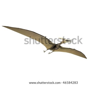 Pterodactyl or Pteranodon dinosaur isolated on white