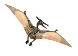 Pterosaur dinosaur toy on white background