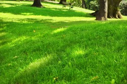 Public Park Fresh Lawn With Morning Sun Light In Perspective With Selective Focus
