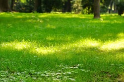 Public Park Fresh Lawn With Morning Sun Light In Perspective With Selective Focus And Bokeh