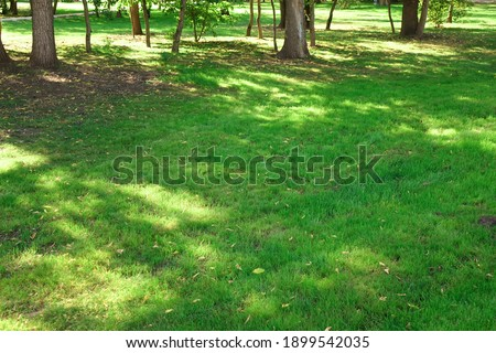 Public Park Shady Fresh Lawn Green Background Or Texture. Lawn Made From Turf Or Sod. Focus Selective. Сток-фото ©