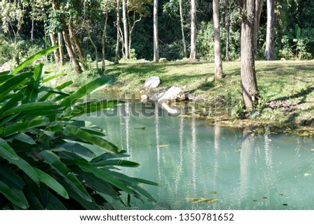 Public pool is green, with trees, ornamental plants and pebbles and mountainous soils surrounding the pool, a natural forest in northern Thailand. #1350781652
