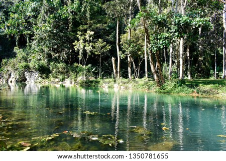 Public pool is green, with trees, ornamental plants and pebbles and mountainous soils surrounding the pool, a natural forest in northern Thailand. #1350781655