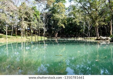 Public pool is green, with trees, ornamental plants and pebbles and mountainous soils surrounding the pool, a natural forest in northern Thailand. #1350781661