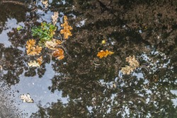 Puddle with fallen oak leaves texture background