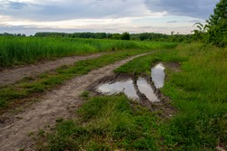 Puddle with swamp and water on the road near a wheat field.