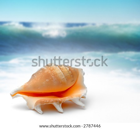 Puerto Plata - Caribbean - sea shell