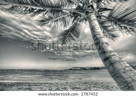 Puerto Plata - Caribbean - sepia  - palm - stock photo