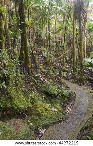 Puerto Rico. Caribbean National Forest El Yunque. Tropical rain forest.