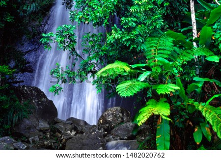 Puerto Rico, El Yunque, La Coca Falls, El Yunque  National Forest, tree fern and waterfall, tropical rainforest