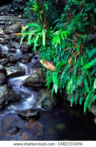 Puerto Rico, El Yunque National Forest, Caimatillo Stream and lush vegetation #1482155696