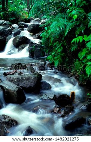 Puerto Rico, El Yunque National Forest, Caimatillo Stream, tropical rainforest