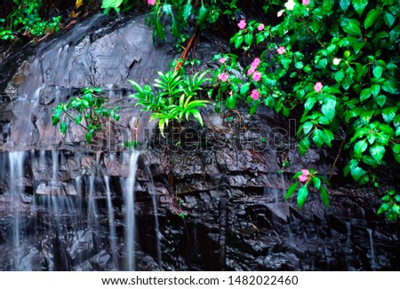 Puerto Rico, El Yunque National Forest, impatiens and waterfall, tropical rainforest