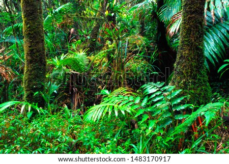 Puerto Rico, El Yunque National Forest, lush vegetation #1483170917