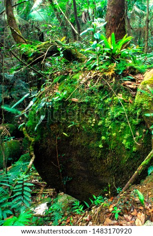 Puerto Rico, El Yunque National Forest, lush vegetation #1483170920
