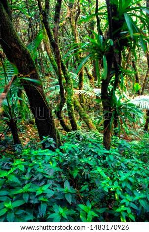 Puerto Rico, El Yunque National Forest, lush vegetation #1483170926