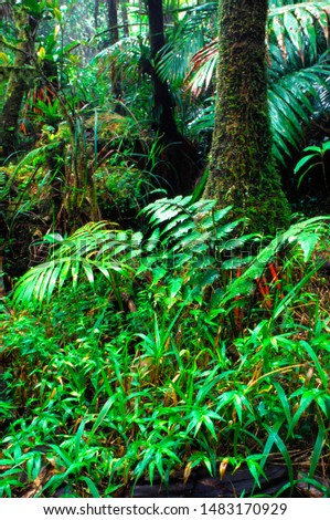 Puerto Rico, El Yunque National Forest, lush vegetation #1483170929
