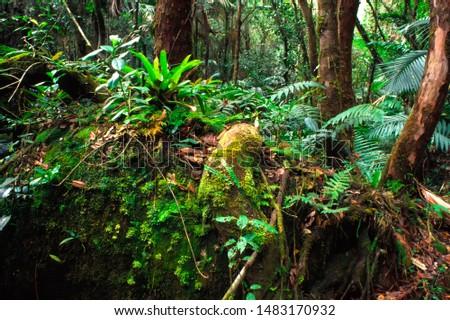 Puerto Rico, El Yunque National Forest, lush vegetation #1483170932