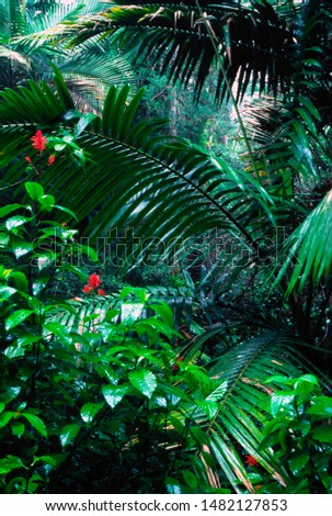 Puerto Rico, El Yunque National Forest, palm trees and flowers, tropical rainforest