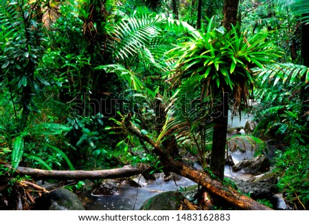 Puerto Rico, El Yunque National Forest, stream and lush vegetation #1483162883