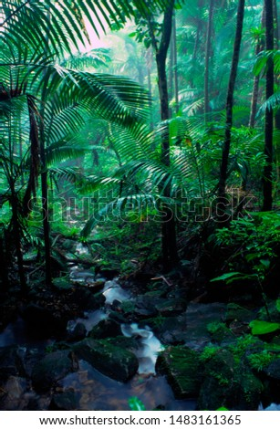 Puerto Rico, El Yunque National Forest, trees and mist, tropical rainforest
