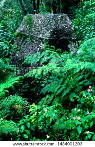 Puerto Rico, El Yunque National Forest, tropical rainforest