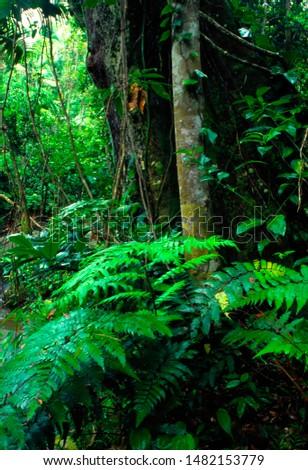 Puerto Rico, El Yunque National Forest,tropical rainforest, lush Vegetation #1482153779