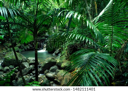 Puerto Rico, El Yunque National Forest, tropical rainforest, Sierra palms and waterfall, tropical rainforest