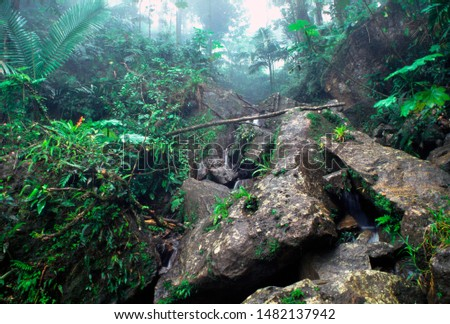 Puerto Rico, El Yunque National Forest, vegetation and mist, tropical rainforest
