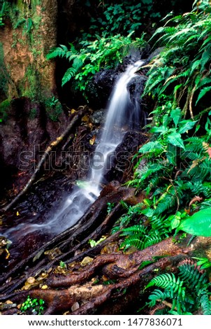 Puerto Rico, El Yunque National Forest, waterfall, tropical rainforest