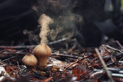 Puffball fungus spores reproduction smoke mushroom