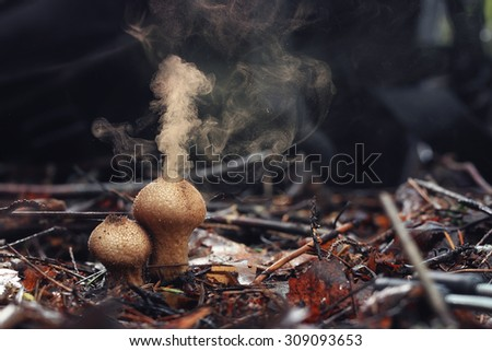 Free Puffball fungus spores reproduction smoke mushroom ... Puffball Mushroom Smoke
