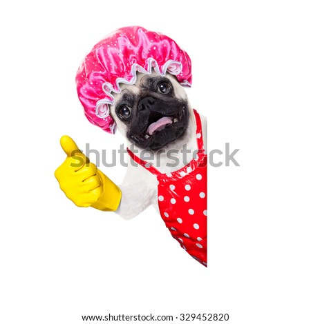 f04a71c893e288 Royalty-free French bulldog ready for summer…  241183462 Stock Photo ...