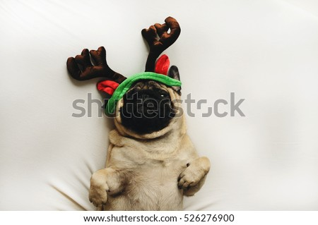 Pug dog in Christmas costume lying on white