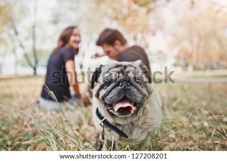 Pug-dog walk in the park and look to camera