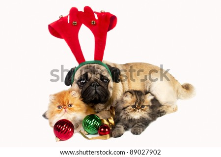 Pug dog wearing antler with two little Persian kittens, surrounded by Christmas ornaments.
